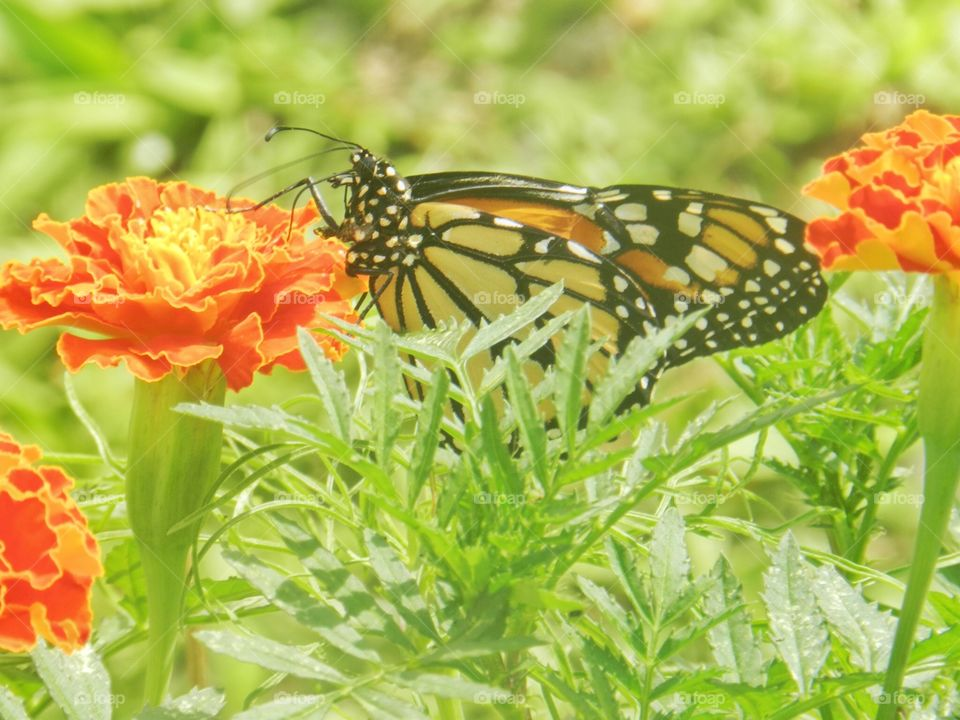 Nature, Summer, Butterfly, Bright, No Person