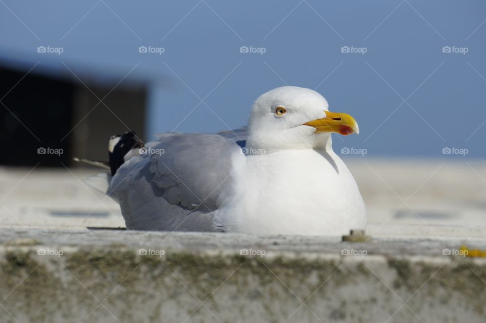 Seagull perching on wall