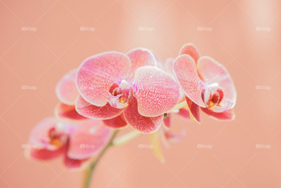 Nature, Flower, Flora, Beautiful, Bright