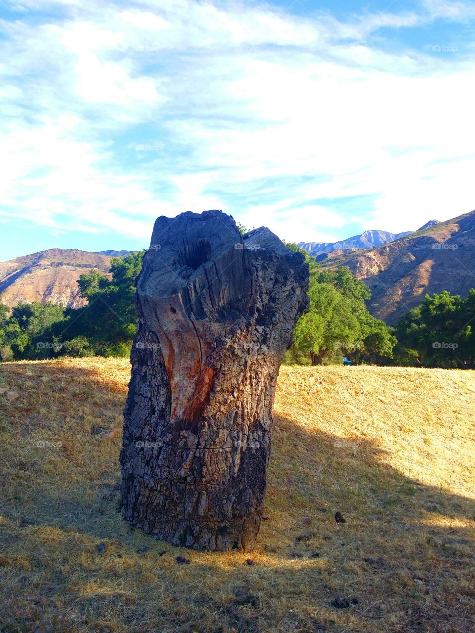 Lonely Stump. Had a great hike