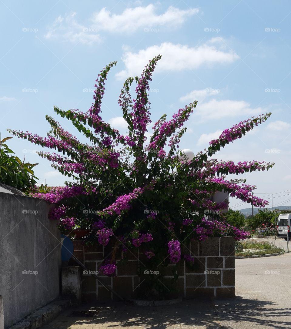 A beleza desta planta na natureza.