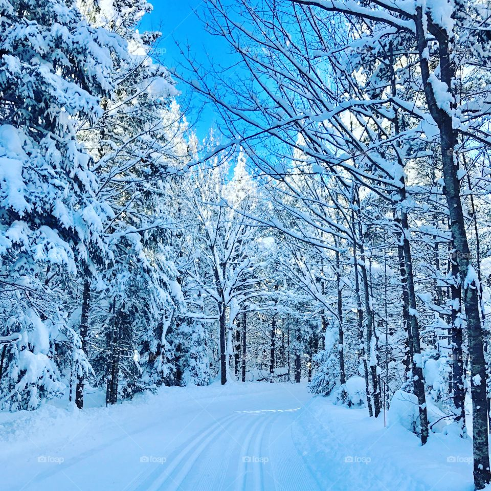 Beautiful Northern Ontario Forest after a heavy snow