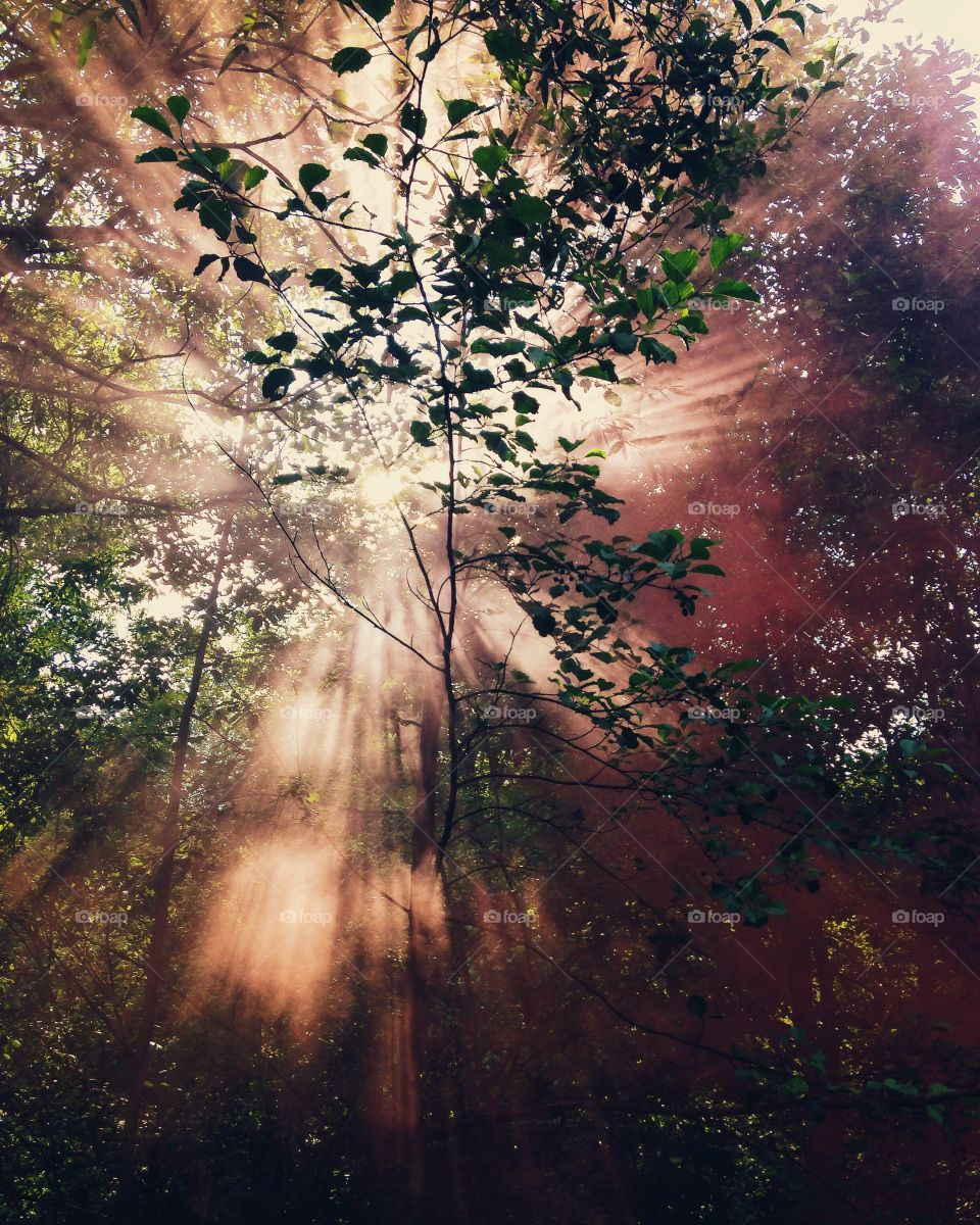 Low angle view of sunlight in forest