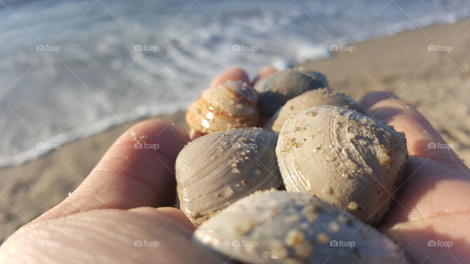Close-up of sea shell on holding hand