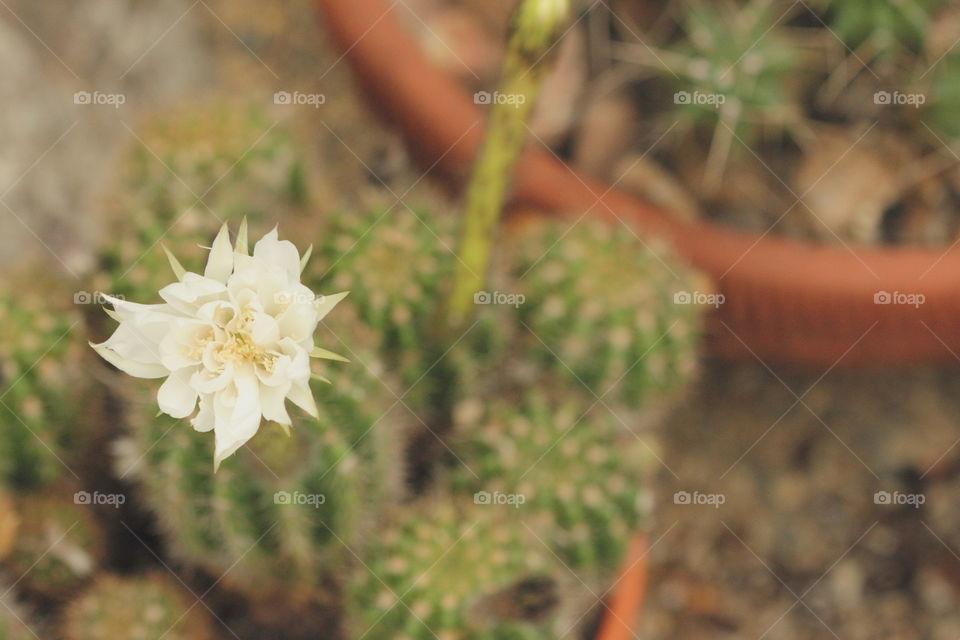 Spiky Flower
