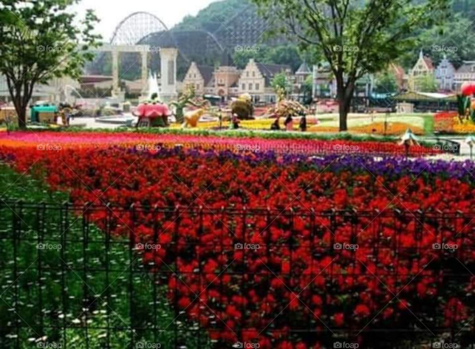 Flowers everywhere at Everland, Seoul