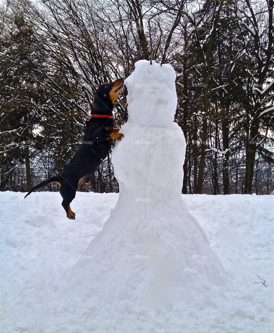 Hot dogg jumping on a snowman.