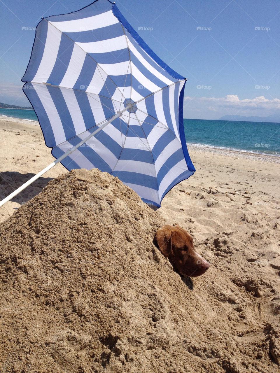 beach dog sand preveza by zacharis81
