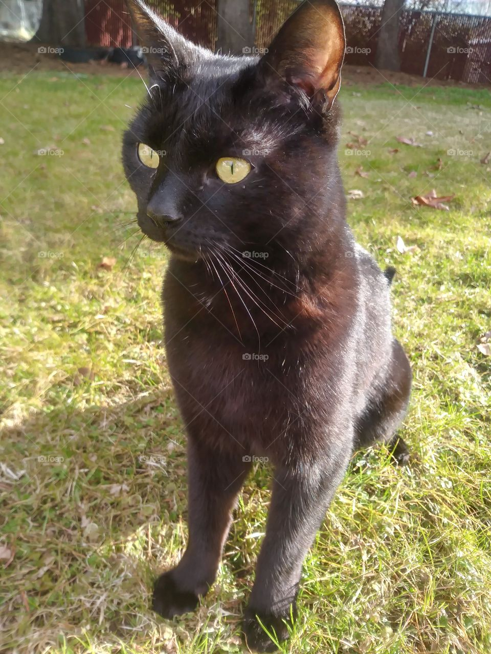 A black cat named Sebastian enjoying the day 💖