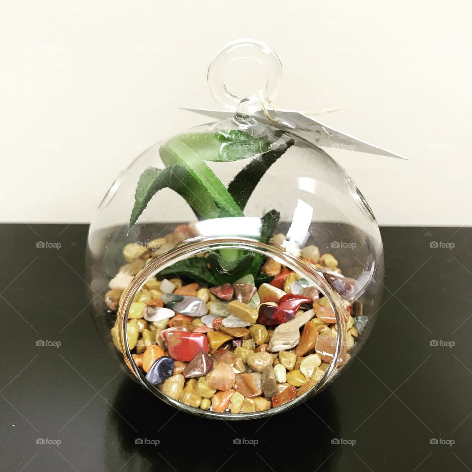 Overgrown succulent plant in a glass globe terrarium with rocks and crystals