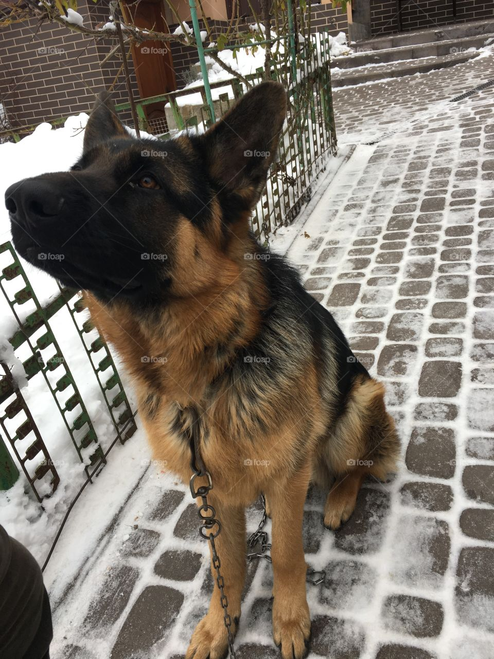 Dog, Canine, Pet, Mammal, Animal