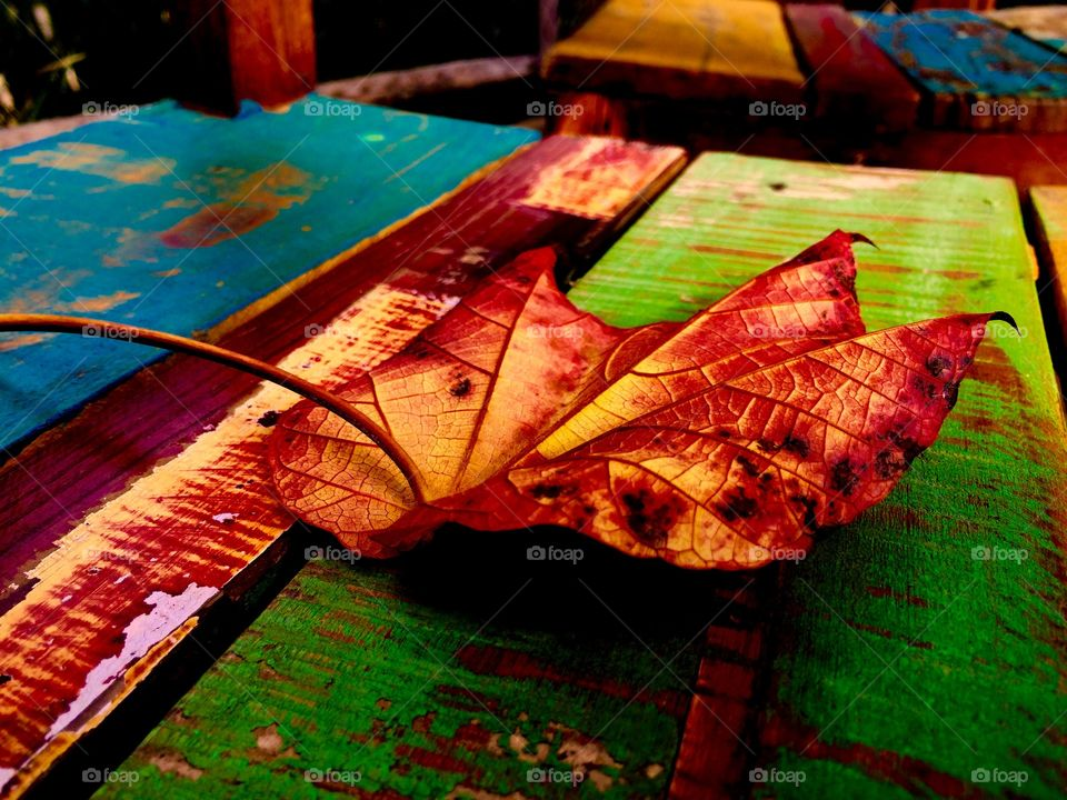 Leaf on colorful chair