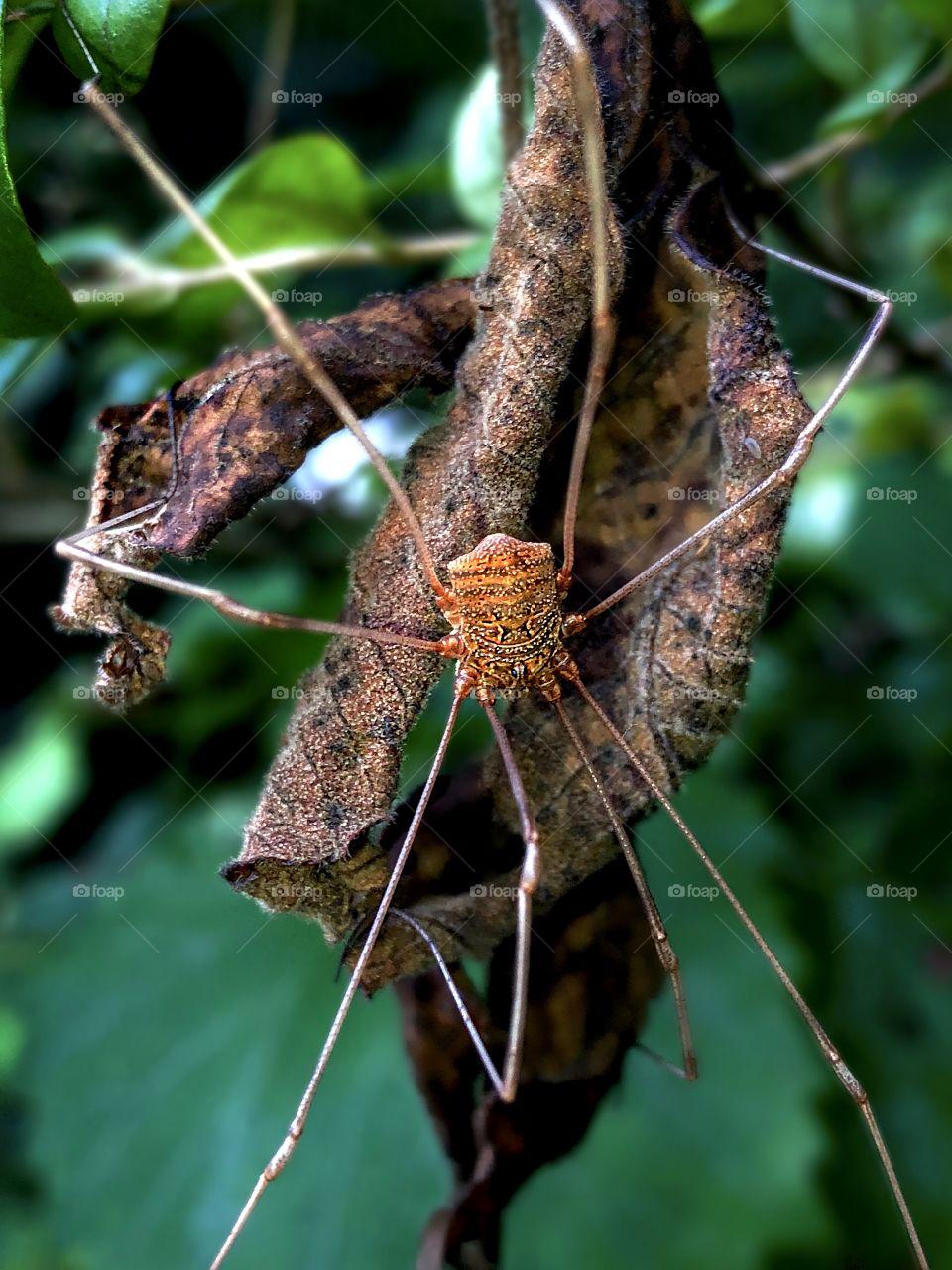 ArachniPose