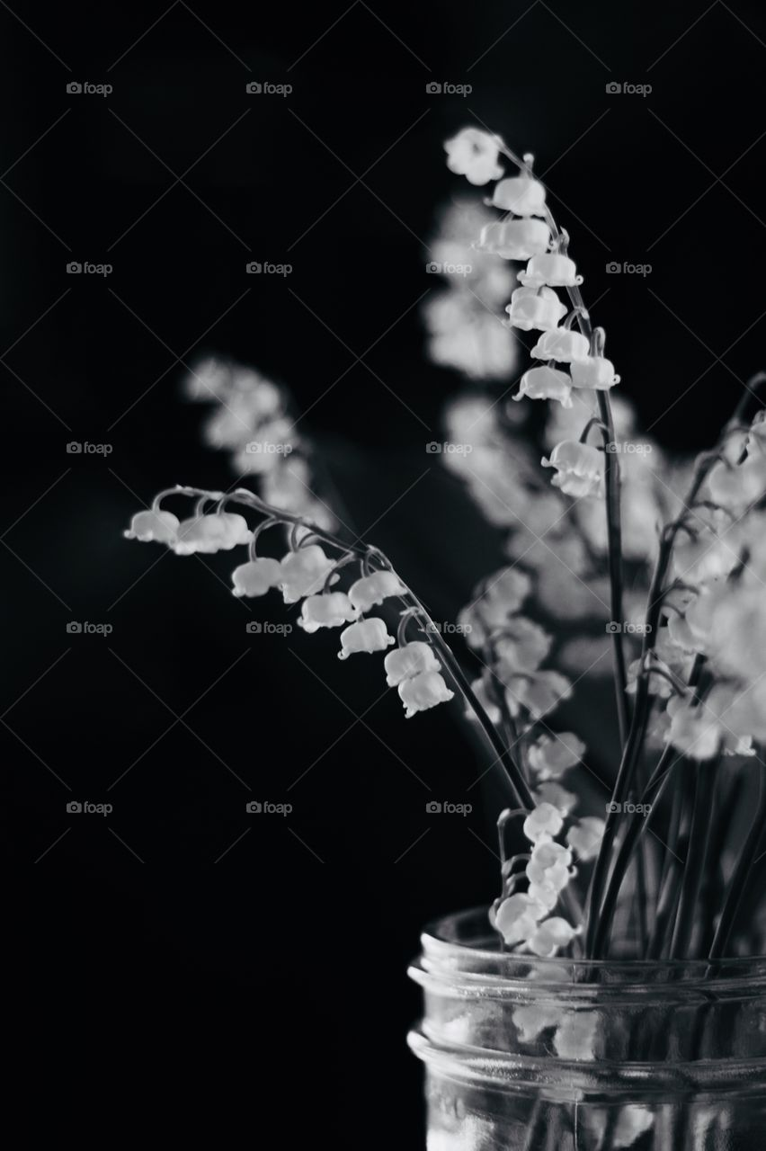 Still life of Lily of the Valley blossoms in a glass jar in black and white