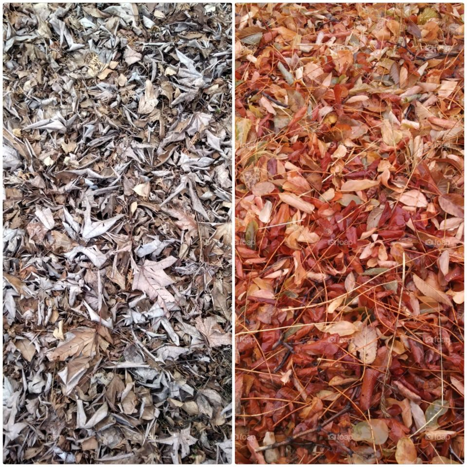 Dry, Desktop, Leaf, Ground, Batch