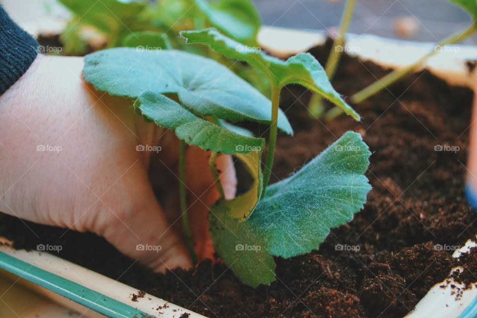 Person planting plant