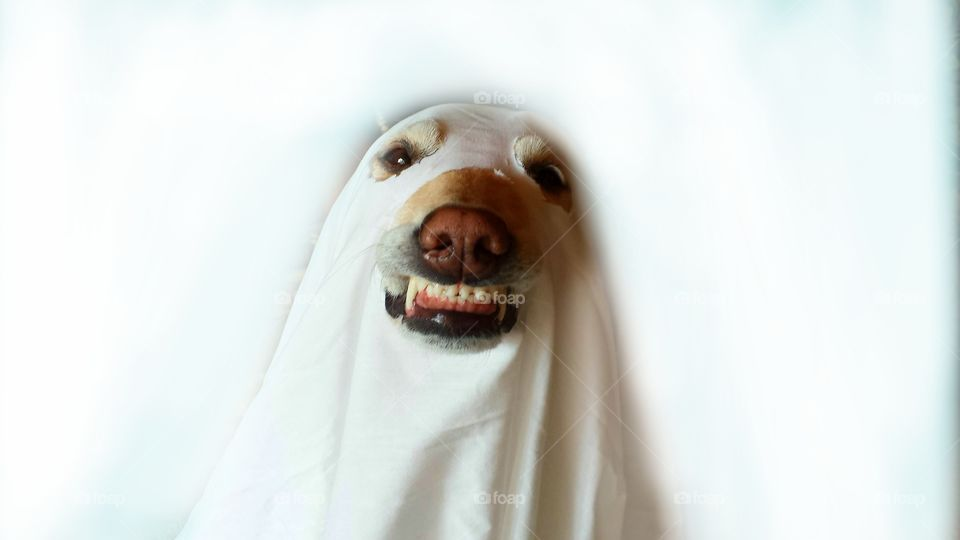 The Smiling Ghost!!