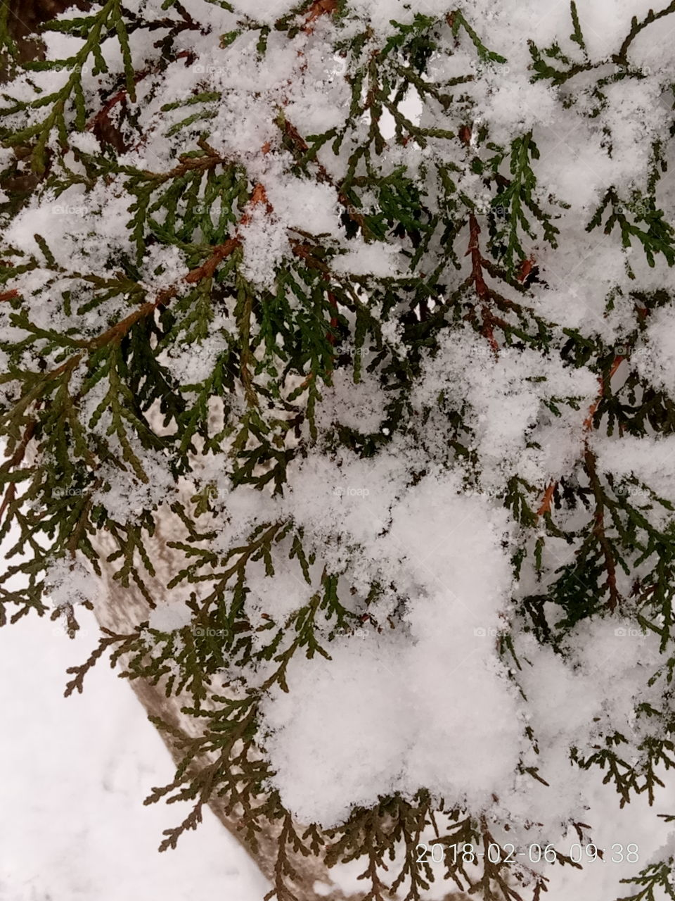 Tree, Winter, No Person, Christmas, Desktop