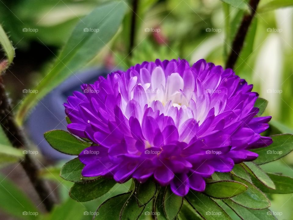 beautiful flower in bloom