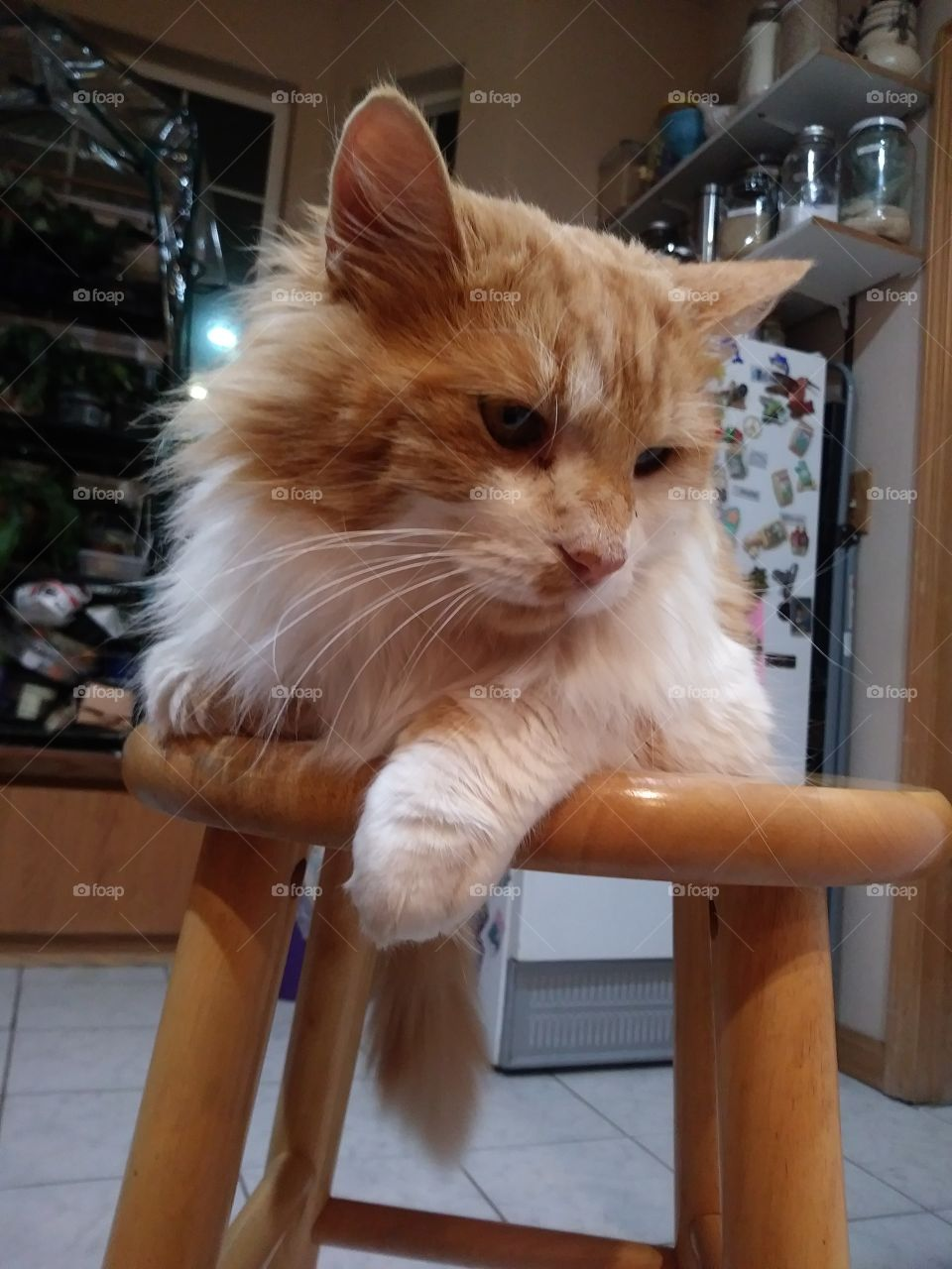 Orange and white cat resting on a stool