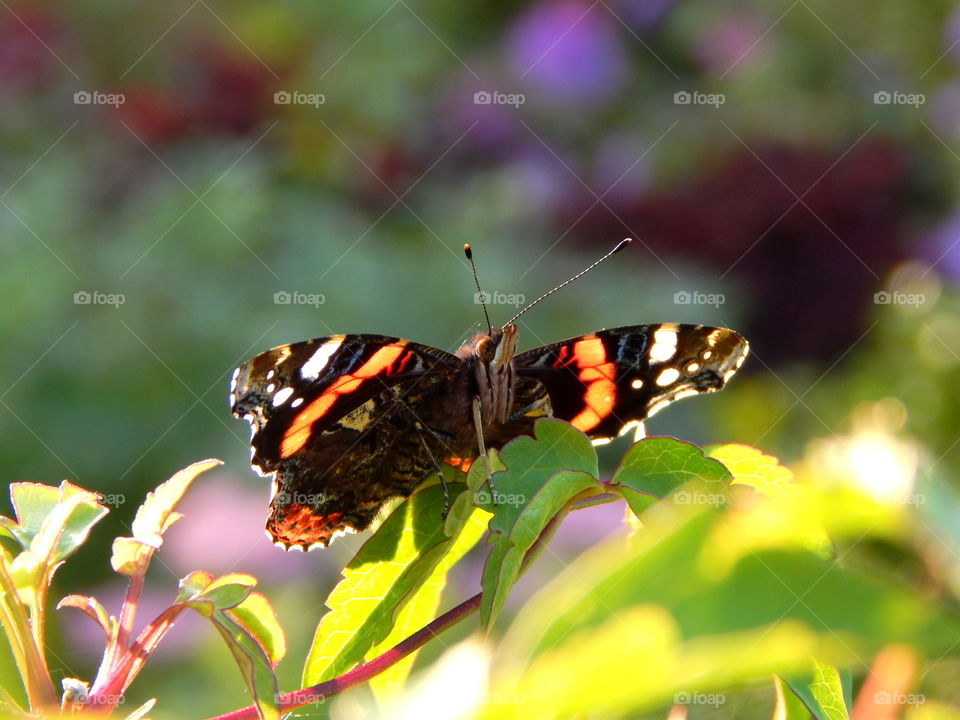 Amazing butterfly catching light of sun