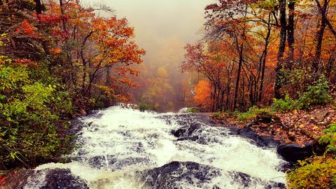Water flowing near autumn trees
