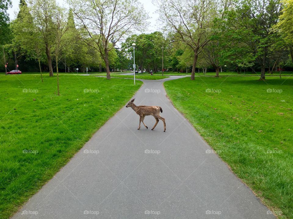 Deer standing in between road