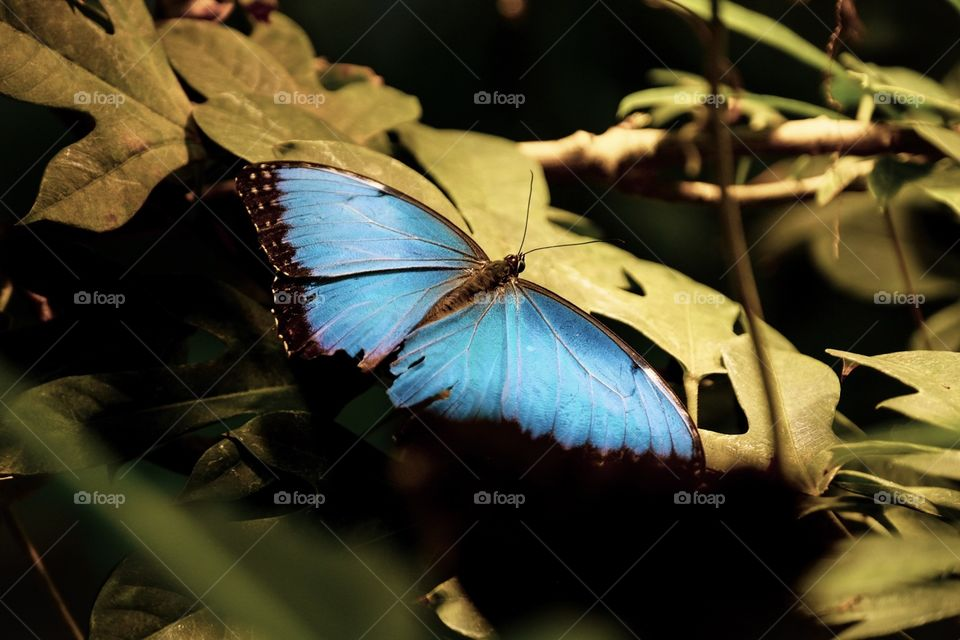 Butterfly In The Shadows, Butterfly Lands On A Plant, Insect Photography, Blue Butterfly