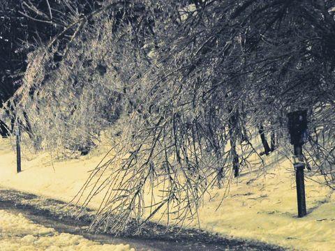 Frozen tree, ice storm