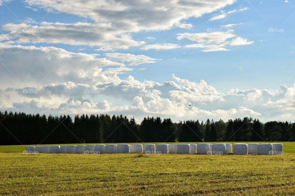 Finnish countryside. Silage bales on a field.