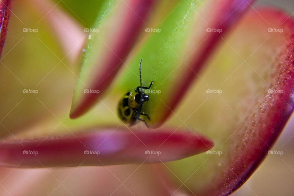 A Bugs Life. Small bug