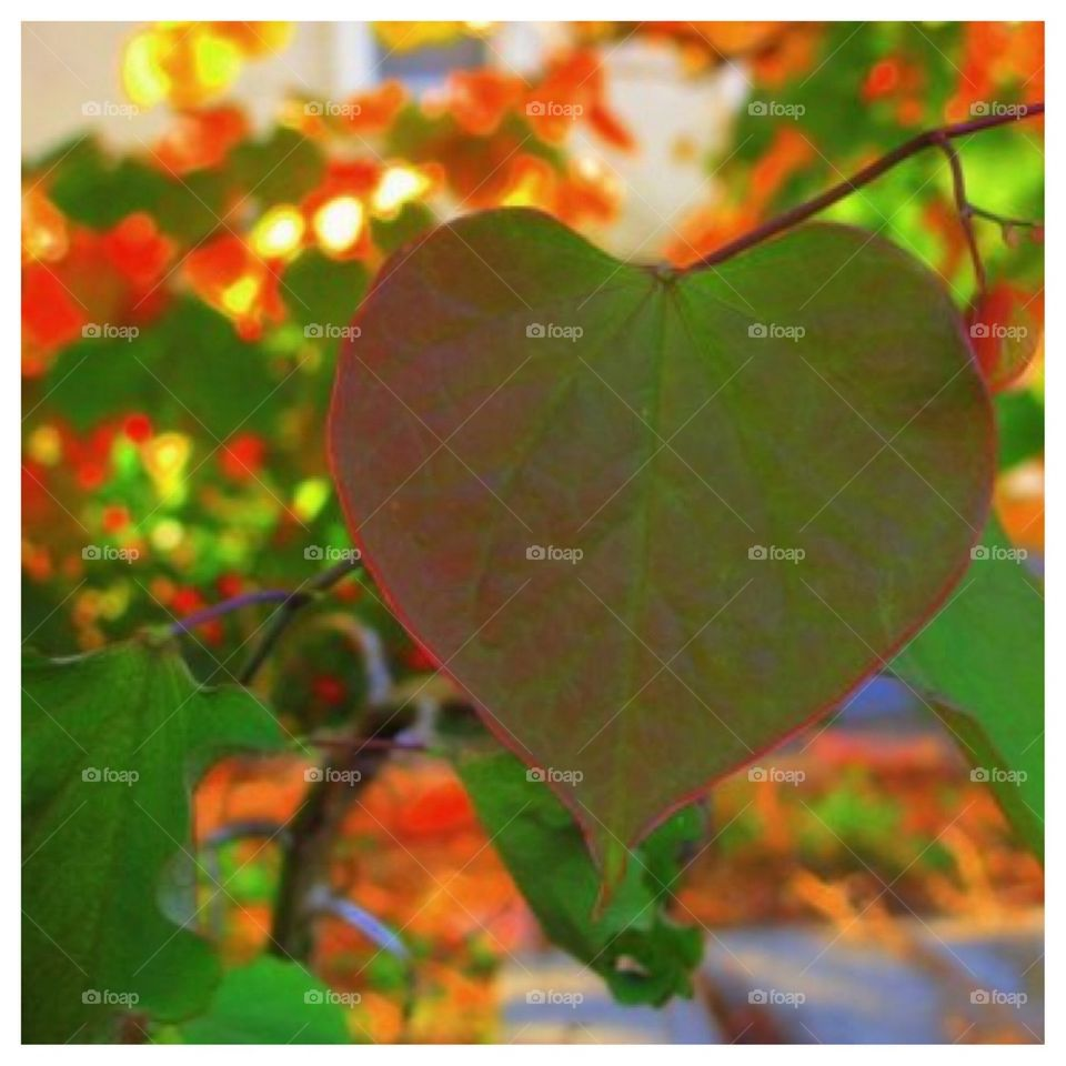 Heart in a Leaf