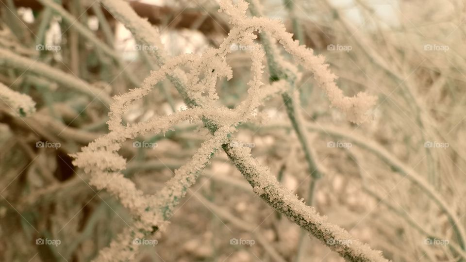 frost on greenery