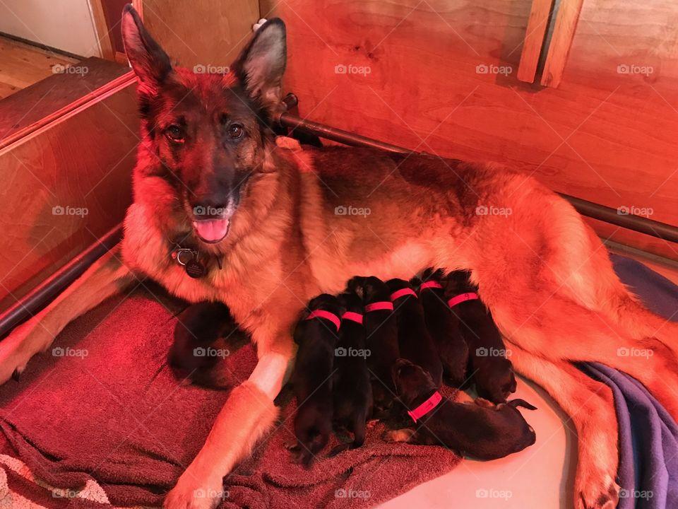 Newborn Puppies with Momma