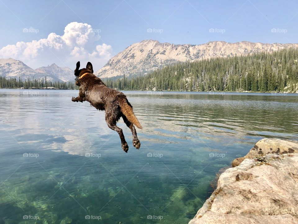 Chocolate lab jumping into clear Idaho mountain lake with forest fire cloud billowing in the background.