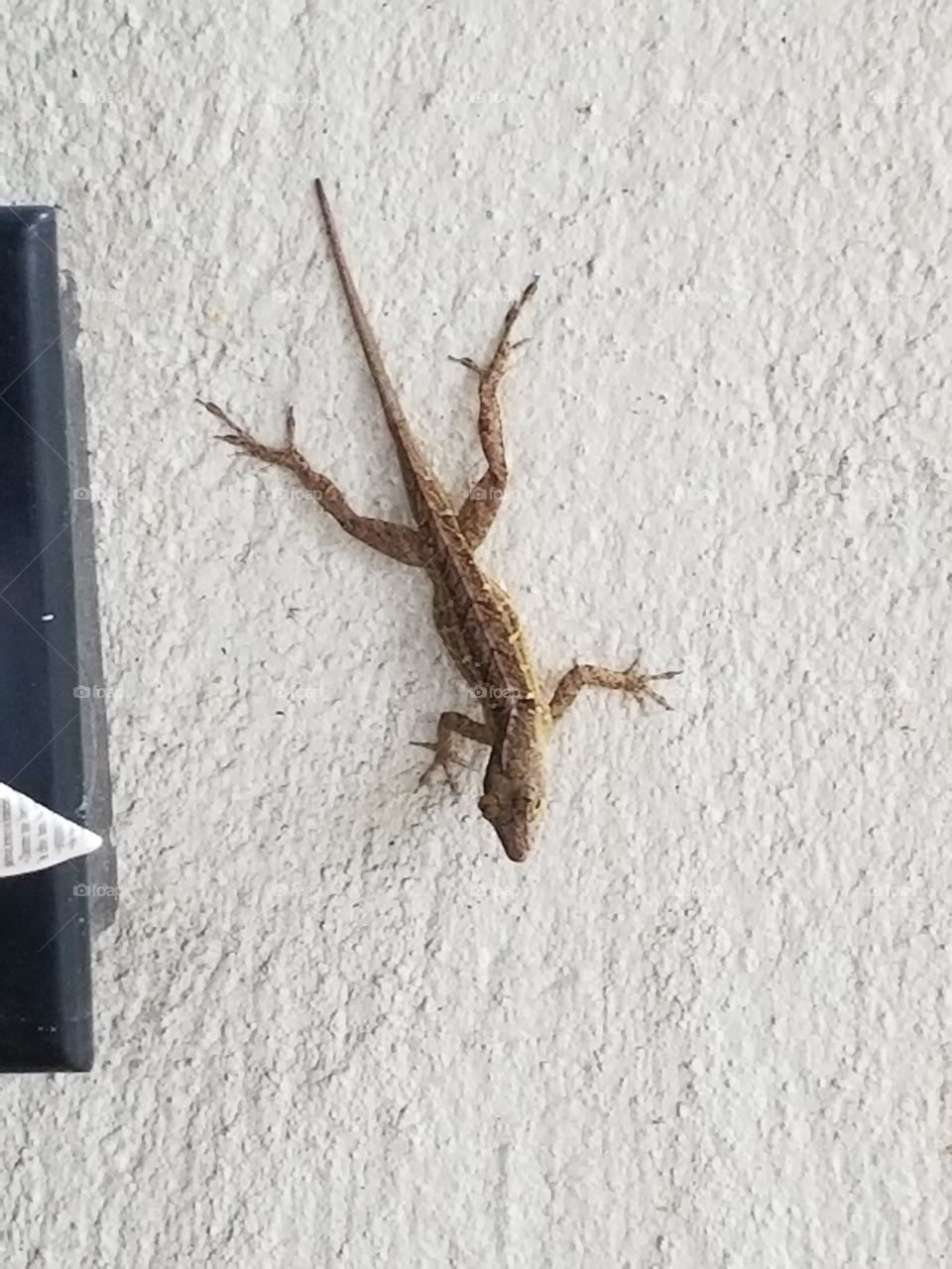 Chilling on the wall.  SoFlo Lizard
