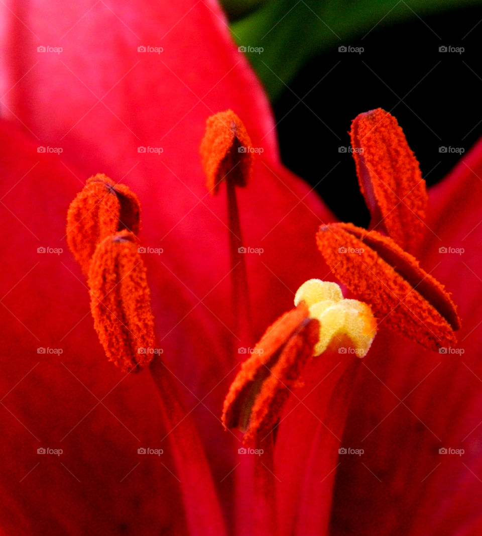 Extreme close-up of a red flower