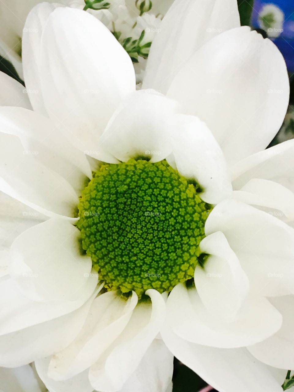Pure white flower