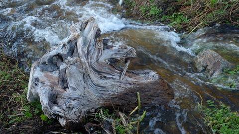Driftwood along a flowing stream
