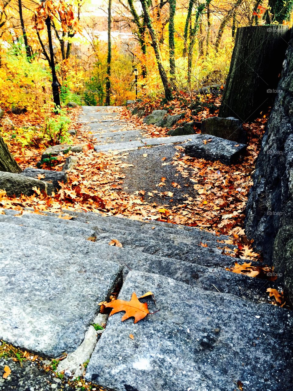 High angle view of autumn leaf on stone staircases