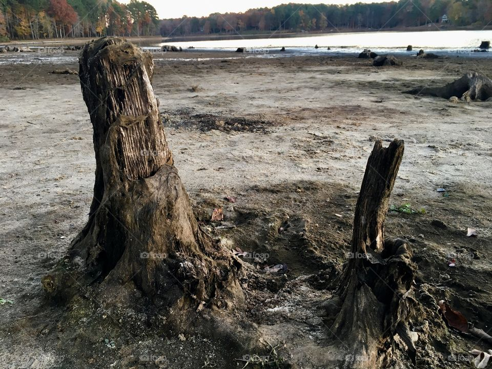 Water's down, stumps are up
