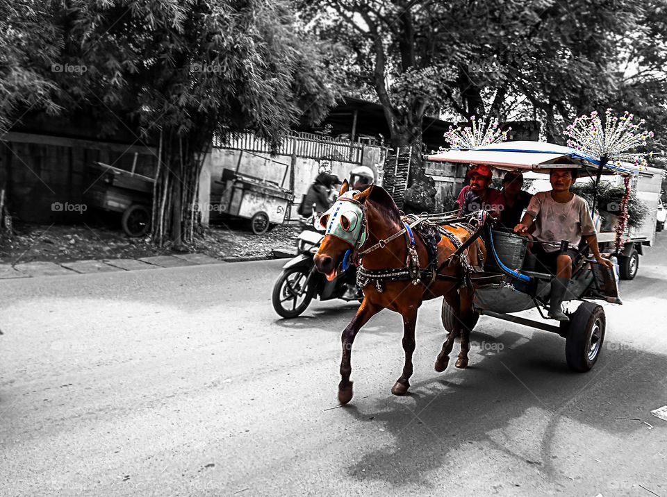 """delman"" horse power transportation is still in use in Indonesia, ""delman"" horse power transportation is still in use in Indonesia, but quite difficult in the city to find grass"