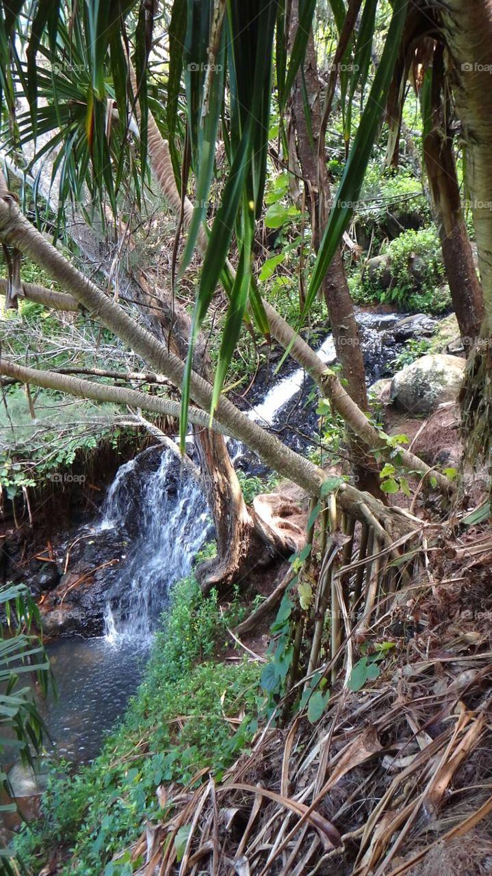 Hiking trail in Kauai