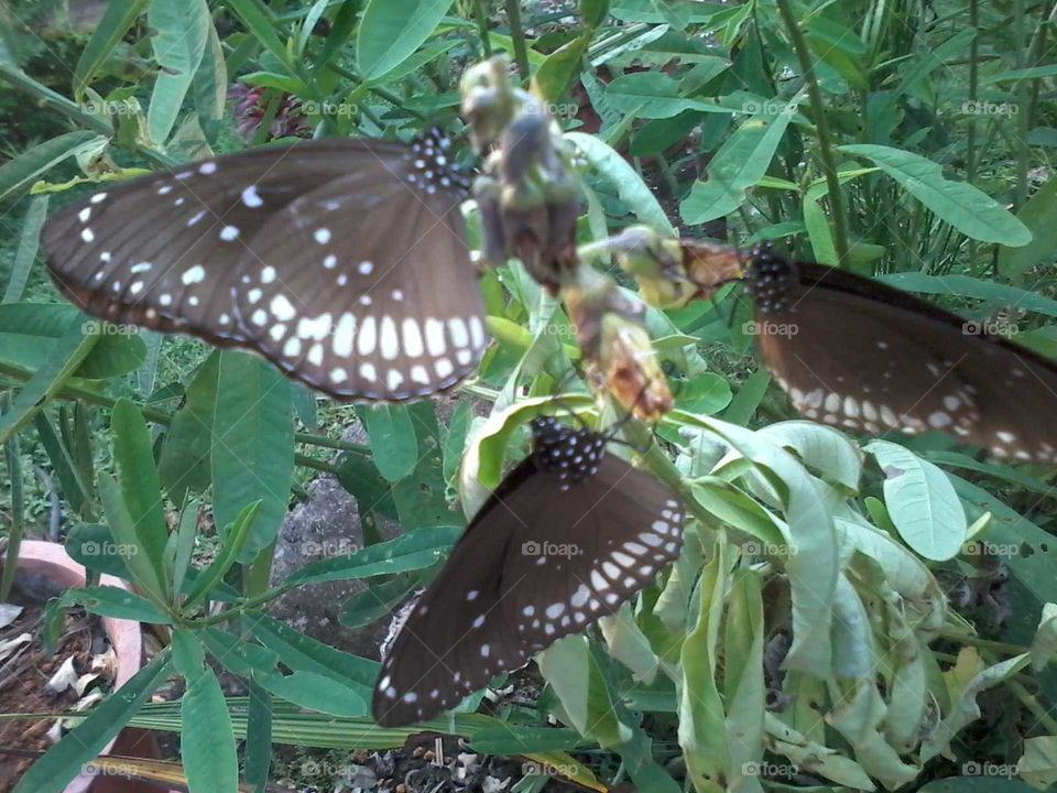 I love butterfly