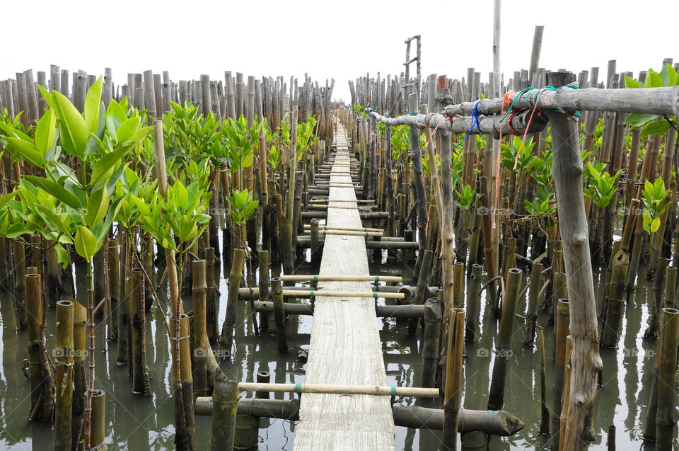 The walkway is made of concrete. For tourists to sea the mangrove forest.