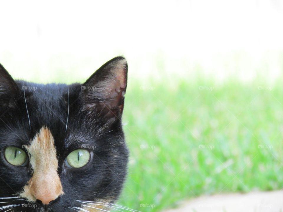Daisy the Cat