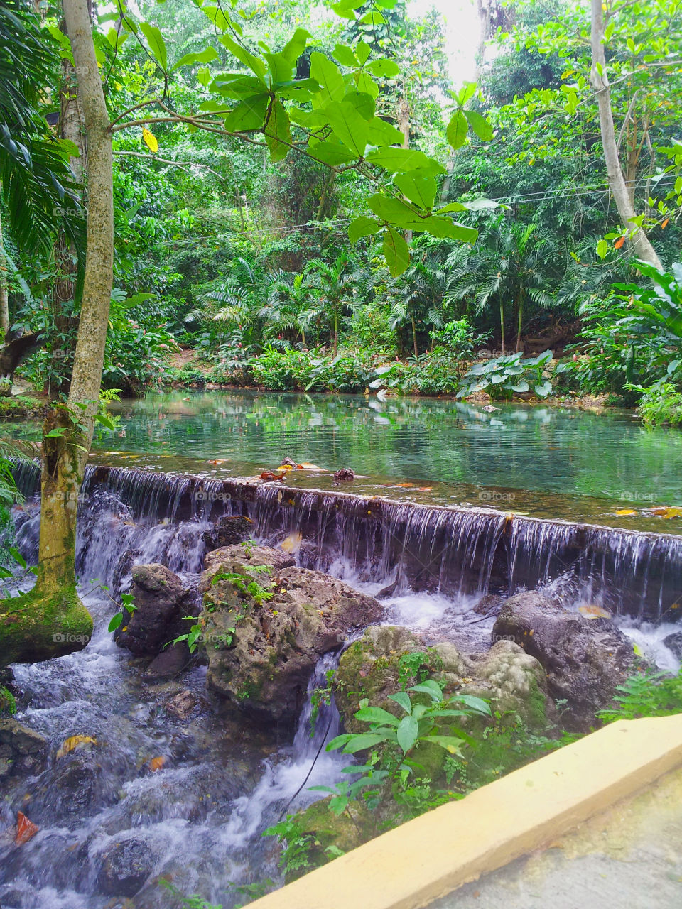 Rainforest waterfall