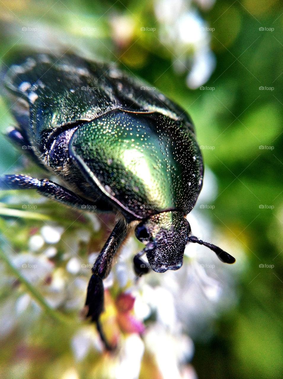 green blomma grönt insects by ka71