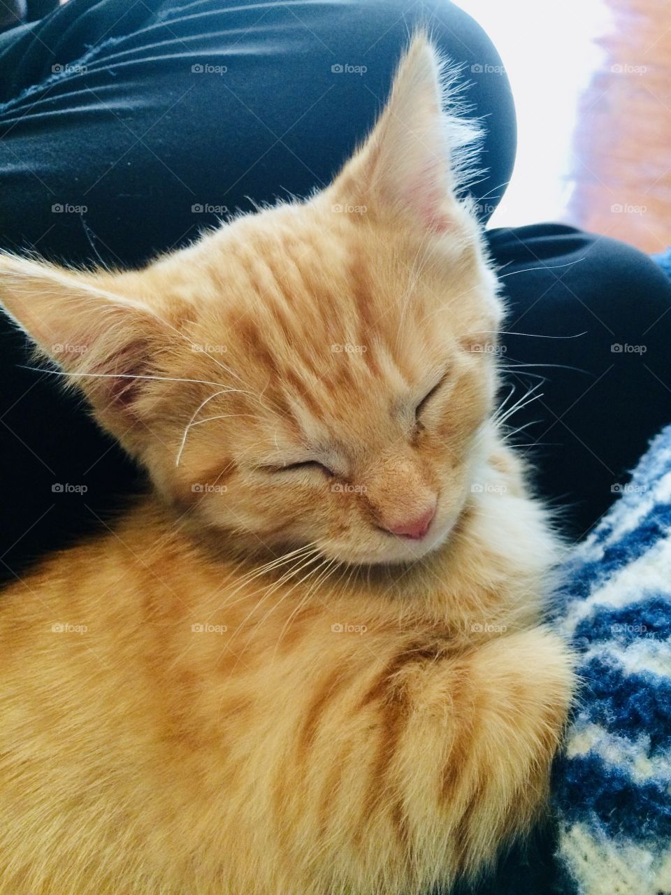 Adorable little orange tabby kitten all cuddled up in white and blue blanket with eyes closed.