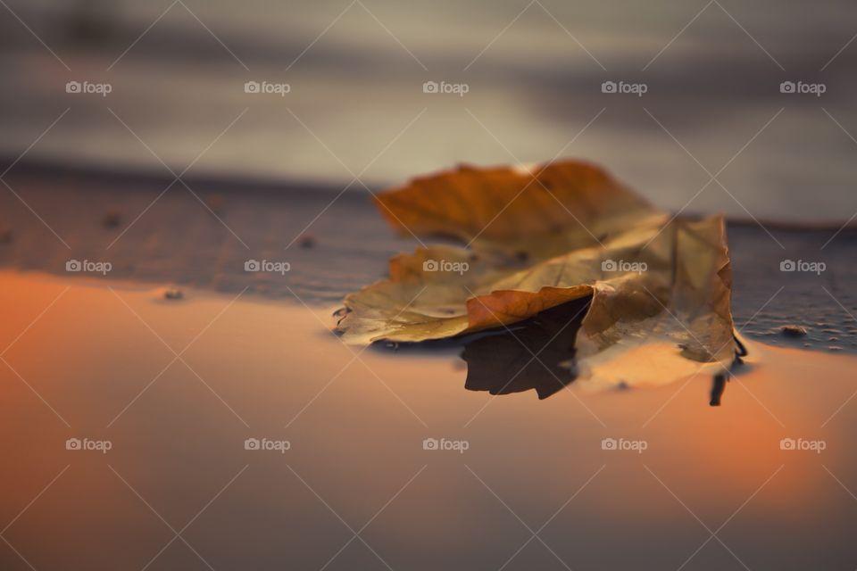Leaf 🍁